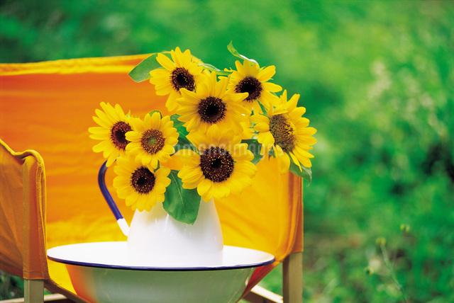 ベンチに置かれた花瓶に入ったひまわりの写真素材 [FYI01472547]