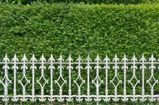 フェンスと生垣の写真素材 [FYI01472570]
