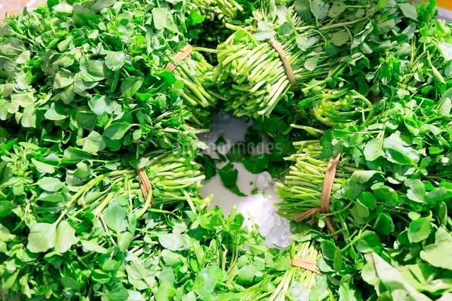 とれたての野菜の写真素材 [FYI01472629]