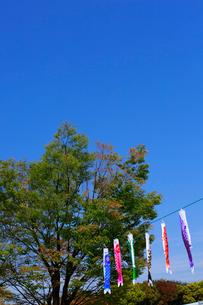 鯉のぼりと青空の写真素材 [FYI01472652]