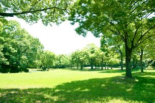 新緑と芝生の公園の写真素材 [FYI01472714]