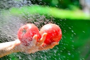 冷やしたトマトの写真素材 [FYI01472770]