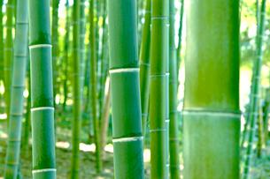 竹林の写真素材 [FYI01472782]
