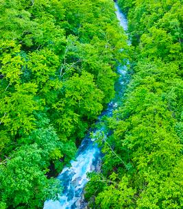 新緑と美瑛川の写真素材 [FYI01473154]