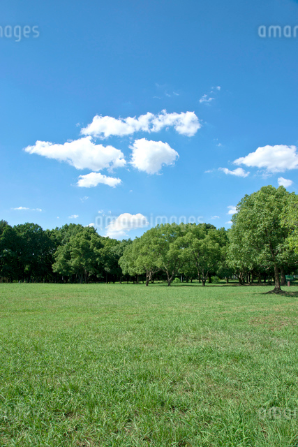 青空と雲と公園の緑の写真素材 [FYI01473384]