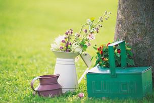 庭のガーデニングの写真素材 [FYI01473407]