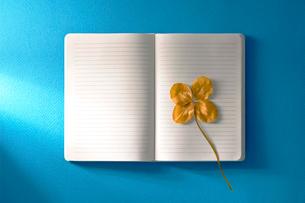 四葉のクローバーの枝折と白いノートの写真素材 [FYI01474067]