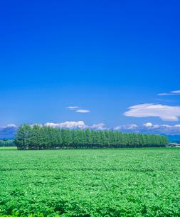 北海道 十勝平野 点景  広大な畑と青空 の写真素材 [FYI01474556]