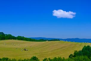 広大な牧草地と青空に夏雲の写真素材 [FYI01474576]