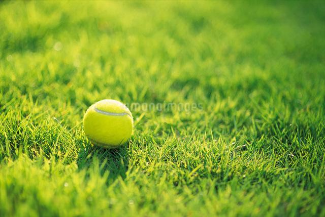 芝生の上のテニスボールの写真素材 [FYI01474742]