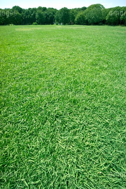 青空と芝生の公園の写真素材 [FYI01474847]