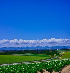 じゃがいもの花咲く田園風景と青空の写真素材 [FYI01474865]