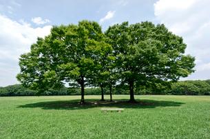 青空と緑の公園の写真素材 [FYI01474909]