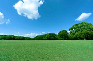 青空と緑の木立ちの写真素材 [FYI01475151]