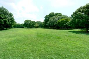 青空と緑の公園の写真素材 [FYI01475168]
