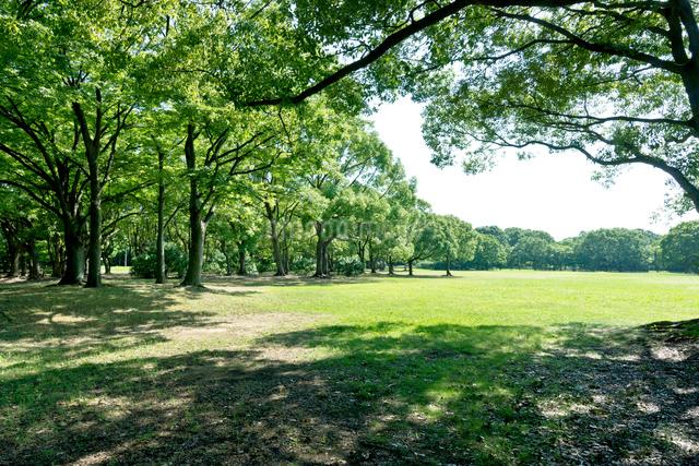 青空と緑の公園の写真素材 [FYI01475274]