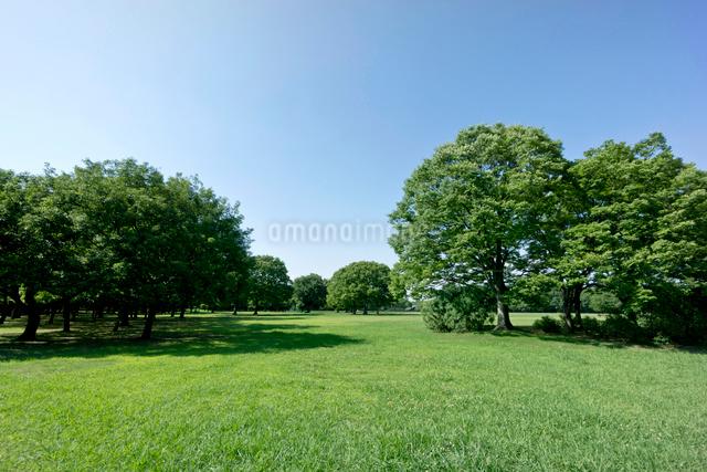 青空と緑の公園の写真素材 [FYI01475660]