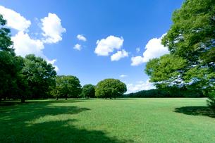 青空と緑の木立ちの写真素材 [FYI01475925]