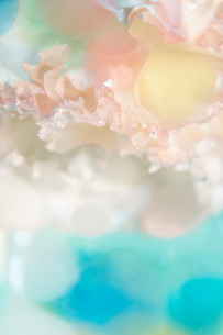 花びらと丸い透明のゼリーの写真素材 [FYI01476194]