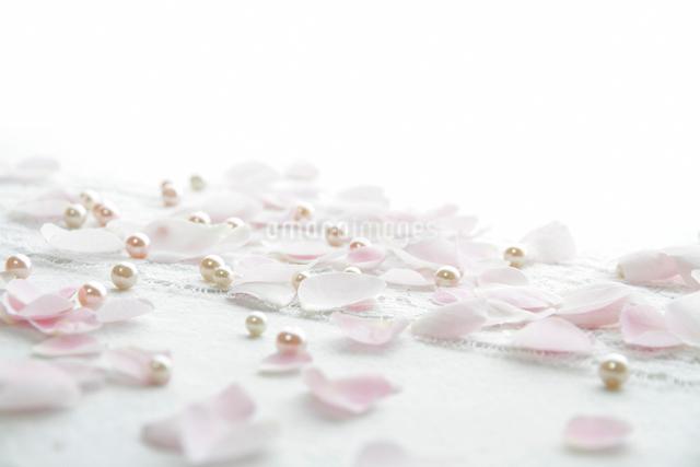 布の上のバラの花びらの写真素材 [FYI01476398]