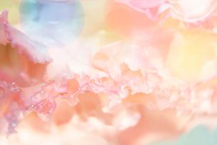 花びらと丸い透明のゼリーの写真素材 [FYI01476493]