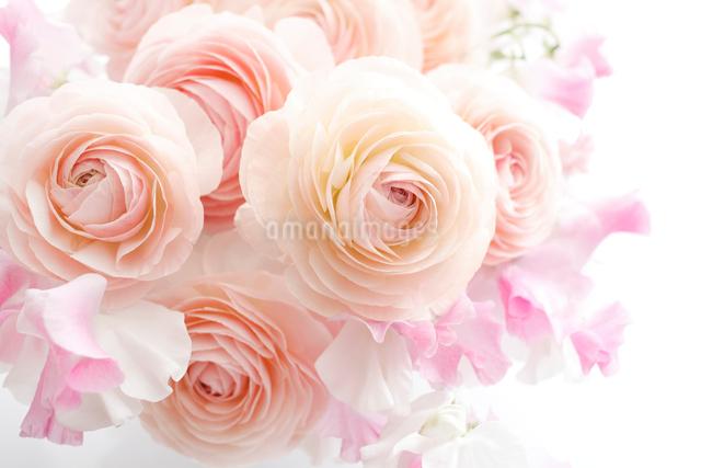 ラナンキュラスとスイートピーの花束の写真素材 [FYI01476644]