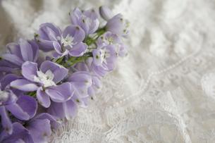 刺繍をほどこした布の上に置かれた薄紫のデルフィニュウムの花の写真素材 [FYI01476686]