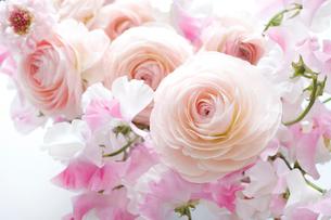 ラナンキュラスとスイートピーの花束の写真素材 [FYI01476737]