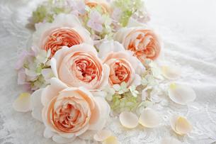 刺繍のある白い布の上に置かれたバラの花と花びらの写真素材 [FYI01476766]