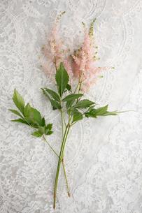 刺繍のある白い布の上に置かれたアスチルベの花の写真素材 [FYI01476817]