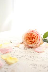 楽譜の上に置かれたバラの花の写真素材 [FYI01476886]