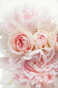淡いピンクの芍薬とバラの花束の写真素材 [FYI01476915]