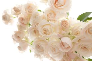 白いバラの花のアレンジメントの写真素材 [FYI01477076]