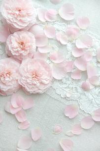 布の上一面のバラの花と花びらの写真素材 [FYI01477097]
