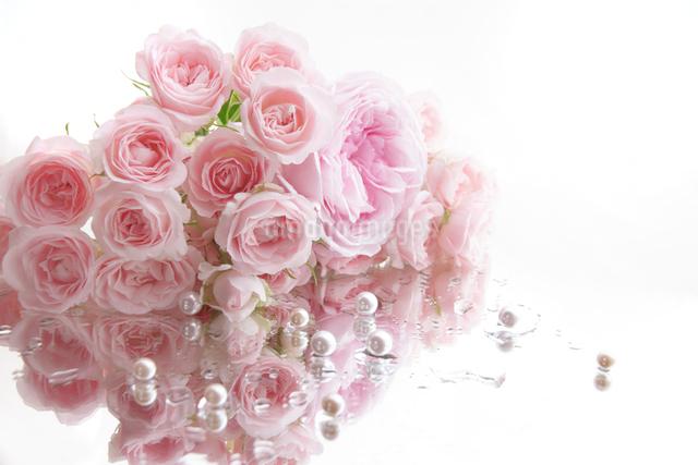 濡れた鏡の上に置かれたたくさんのピンクのバラと真珠の写真素材 [FYI01477098]