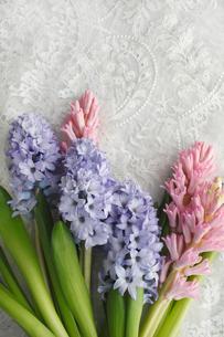 刺繍をほどこした布の上に置かれたヒヤシンスの花の写真素材 [FYI01477159]