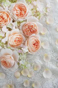 刺繍のある白い布の上に置かれたバラの花と花びらの写真素材 [FYI01477197]