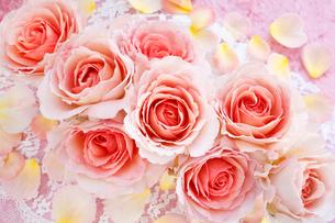 ピンクのバラのアレンジメントと散らばる花びらの写真素材 [FYI01477408]