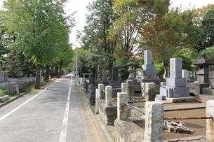 雑司ヶ谷霊園の写真素材 [FYI01477841]