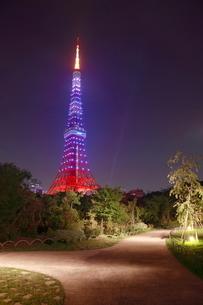 芝公園から東京タワーのライトアップ 夜景の写真素材 [FYI01478003]
