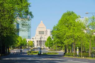 国会議事堂と新緑の街路樹の写真素材 [FYI01478167]
