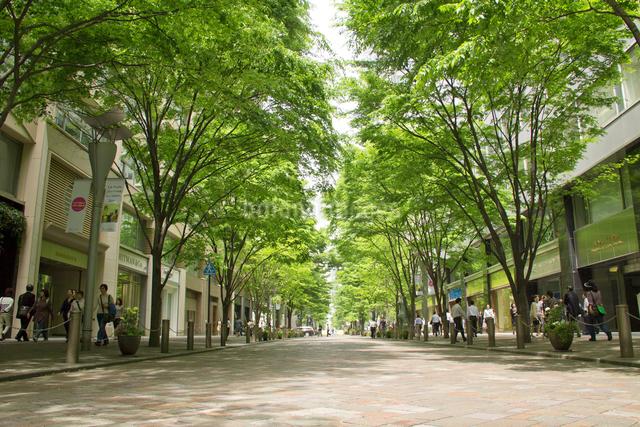 丸の内仲通りの新緑と車道の写真素材 [FYI01478267]