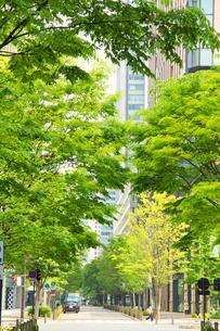 丸の内仲通りと新緑の写真素材 [FYI01478331]