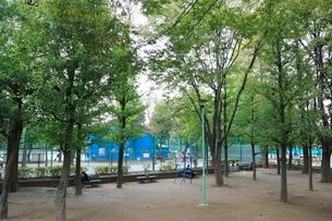 区立竹早テニスコートの写真素材 [FYI01478581]