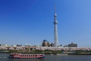 サクラ咲く隅田川とスカイツリーの写真素材 [FYI01478622]