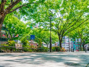 表参道の歩道と木陰の写真素材 [FYI01478725]
