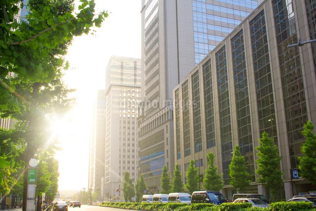 新緑の大手町のビル街の写真素材 [FYI01478900]