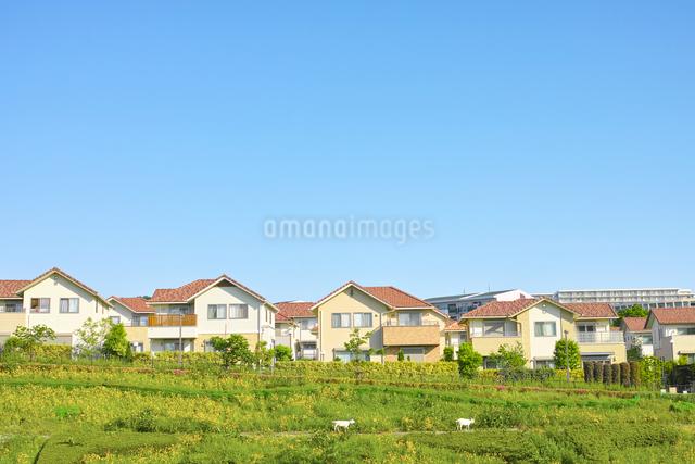 朝日のあたる住宅街の写真素材 [FYI01479380]