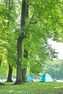 小金井公園のユリノキの森の写真素材 [FYI01479520]