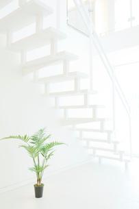 白い階段と観葉植物の写真素材 [FYI01479585]
